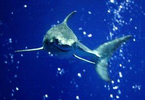 Randy Wilder - Monterey Bay Aquarium