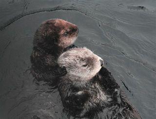 Kit and Mae (Photo © Monterey Bay Aquarium)