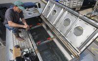 Sardines in truck