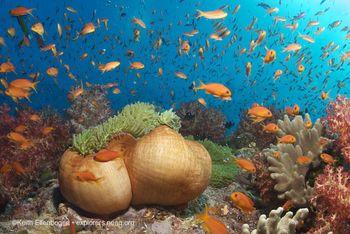 Fiji ellenbogen