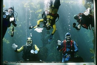 Kelp forest divers